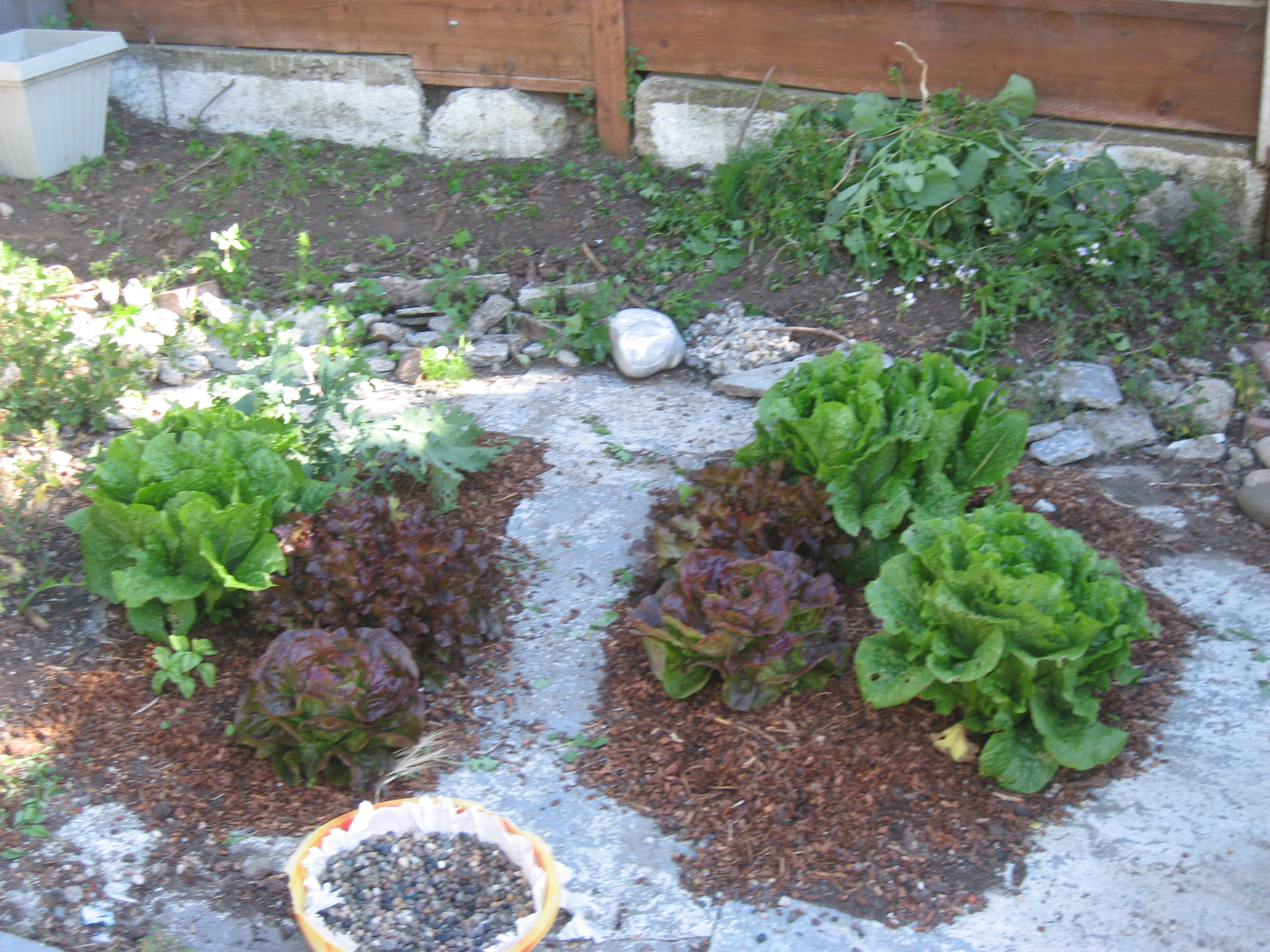 More lettuce and kale!